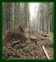 У лесного Муравья Работящая семья: Муравейник строить нужно - Все.